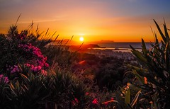 you take my breath away (claudia.kiel) Tags: griechenland greece kreta crete mittelmeer mediterraneansea mediterraneancolours rethymno nature landschaft landscape oleander sonnenuntergang sunset sunsetmood