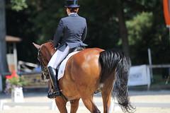 IMG_7929 (dreiwn) Tags: dressage dressur dressuur pferd reitturnier turnierreiten pferdesport horse horseback horseriding equestrian reitverein dressurprfung kandare doublebridle reiten pferde reitplatz ridingarena