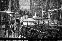 a rainy day (krøllx) Tags: bw midtnorge nikc norway sh sørtrøndelag trondheim trøndelag akamphotowalk blackandwhite city europa europe menneske monochrome norge people rain scandinavia season skandinavia solsiden street streetphotography streetphoto umbrellas water weather 20160903dsc02130edit201609031