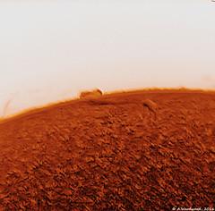 Inverted Filaprom (alastair.woodward) Tags: solar sun astronomy ha disc inverted sunspot filaprom prominence sky skywatcher st80 quark daystar chromosphere point grey blackfly astrophotography
