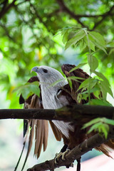 Spread wings (bdrc) Tags: eagle bird raptor wings spread tree branch asdgraphy animal creature nature life pant outdoor park sony a6000 minolta 75300mm f4556 tele zoom