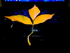 #iPhone (.natia.) Tags: iphone leaves autumn creative yellow idea beautiful black just light iphoneography natigraphy