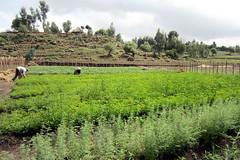 Ethiopia (EU Humanitarian Aid and Civil Protection) Tags: corps change ethiopia drr climate adaptation voluntary evhac