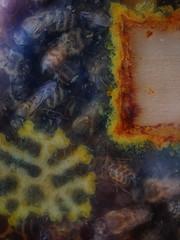 If Bach would have kept Bees ~ Wenn Bach Bienen gezchtet htte -- Beehive, Museum Schlo Orth (hedbavny) Tags: wien orange nature museum insect licht sterreich nationalpark natur spuren bee innen bach gelb inside insekt beehive glas vitrine biene honig kunstlicht wachs orth johannsebastianbach exponat bienenstock bienenwachs arvoprt invi zucht prt orthanderdonau donauauen bienenzucht bienenwabe zchten bienennest ausstellungsstck nationalparkzentrum paert honiggelb schlosorth arvopaert wennbachbienengezchtethtte einsichtig museumschlosorth glasbienenstock