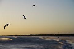 (.Tatiana.) Tags: sea beach brasil riodejaneiro de mar pigeon ponte açucar sugarloaf pão niterói ponterioniterói arraialdocabo