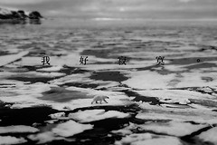(haru yang) Tags: sea snow ice wet norway horizontal walking outdoors photography frozen day wildlife watching fulllength nopeople polarbear globalwarming icefloe oneanimal arcticocean nonurbanscene animalthemes coldtemperature polarclimate svalbardislands