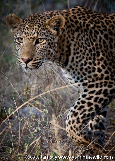 Kruger National Park - Scott Ramsay