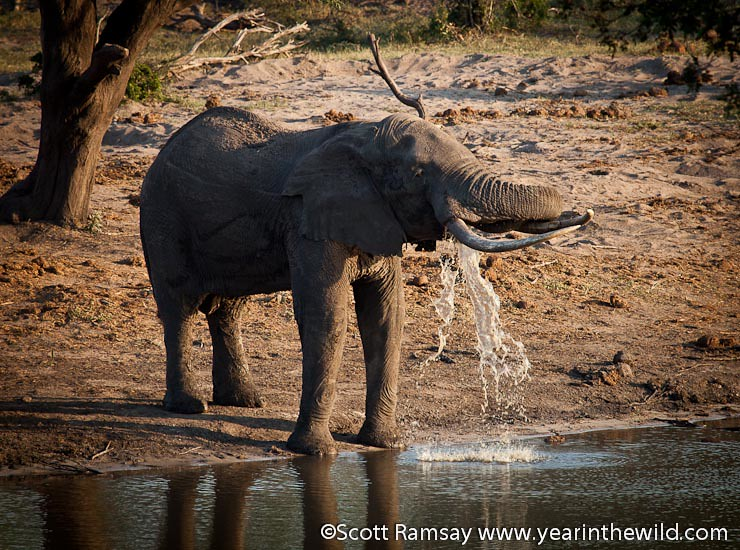 Tembe Elephant Park - South Africa