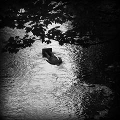 GLUB (davydubbit) Tags: scotland edinburgh stockbridge fallenover facedown waterofleith gormleystatue