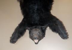 bearguy1