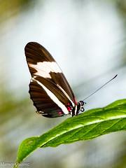 Borboleta (Marney Queiroz) Tags: parque cores do flor aves borboleta das cor foz iguacu arara queiroz beija marney panasonicfz35 marneyqueiroz