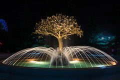 Metal Tree (Dr. Harout) Tags: tree art water fountain metal architecture zeiss georgia lights nightshot sony tripod streetphotography amusementpark za tbilisi manfrotto amount carlzeiss 322rc2 055cxpro3 sal24f20z distagont224 slta77v