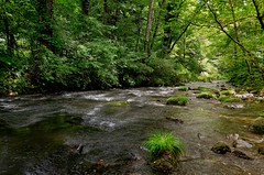 Karuizawa (Matthias Harbers) Tags: tree nature water japan forest photoshop river woods nikon stream wasser bach labs dxo karuizawa wald nagano baum hdr topaz 18200mm 3xp photomatix kitasaku kitasakudistrict flickraward d7000