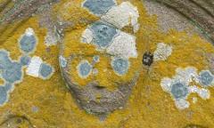 Lichens (Edinburgh Nette) Tags: lichens graveyards july16 st cyrus crustose explored wow