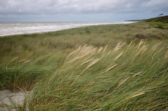 land in motion (Fotogezwitscher) Tags: beach dune nature grass plant wind flash clouds storm windy sand shore ocean baltic sea