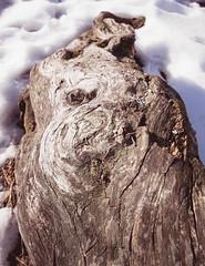 Nails (Jori Samonen) Tags: snow finland helsinki nails deadwood pihlajamki