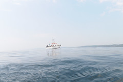 Plymouth-201605-27-CalmSea-PickUp (Tony J Gilbert) Tags: plymouth marine macro underwater diving nikond300 handdeeps jameseaganlayne hilseapointrocks scylla ceeking wwwdivingplymouthcom