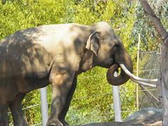 100_2494 (Trixter13) Tags: totem rhinos eats animals zoo family fun