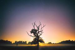 (Jonathan Minto) Tags: night sky dark sunset moonset moon tree nature landscape fog mist longexposure colour color highiso canon5dmkii jonathanmintongc stars canon24mmeflens portrait creepy weird spooky