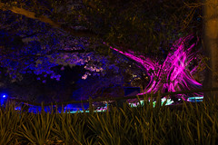 _MG_4811.jpg (Tibor Kovacs) Tags: night colours tree vivid australia events sydney projections light