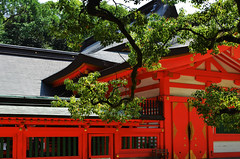 Sumiyoshi Shrine Tree Branch (pokoroto) Tags: sumiyoshi shrine tree branch fukuoka   kyushu  japan 8   hachigatsu hazuki leafmonth 2016 28 summer august