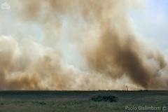 savana in fiamme, savannah on fire (paolo.gislimberti) Tags: tanzania ngorongoro africanparks parchiafricani africanlandscapes paesaggiafricani savana savannah pianura plain meteturistiche touristdestinations wilderness fumo smoke incendio fire