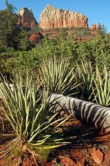 (BehindBlueEyes) Tags: az arizona sedona nature redrocks landscape