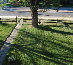 green grass (Tomitheos) Tags: greengrass lawn freshlycut toronto september2016 shadows roomwithaview courtyard squareminimalism longweekend holidaymonday canada