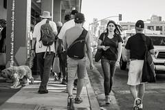 fight fraud with machine learning II (Super G) Tags: nikon287 streetphotography blackandwhite bw people woman man dog truck walking sidewalk