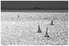 watersports (kurtwolf303) Tags: watersports föhr island insel germany deutschland nordsee northsea sailing segelboote gegenlicht hallig backlightedphoto olympusem1 omd microfourthirds micro43 monochrome bw sw europe wattenmeer unescoweltnaturerbe ocean meer sea unlimitedphotos systemcameras 250v10f topf25 500v20f topf50 750views topf75 topf100 1000v40f 1500v60f topf150 2000views