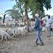 2013_04_14_Bakara_Animal_Market