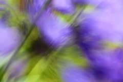 Agapanthus (NikkiNakkiNoo365) Tags: agapanthus flower abstract blur out focus oof canon 1100d