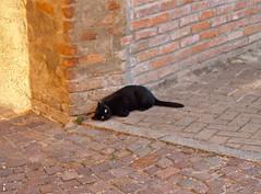 ...e non ditemi che porto sfiga! (SoleTempesta) Tags: gatto soletempesta cat blackcat gattonero mattoni sole