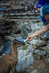 DSC_1332 (Dan Kistler) Tags: samaria gorge hiking rocks sea adventure principia college travel greece