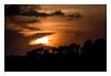 Savane Aubagnaise (Gabi Monnier) Tags: sunset france tree canon soleil flickr jour provence été arbre coucherdesoleil aubagne savane extérieur canoneos600d gabimonnier