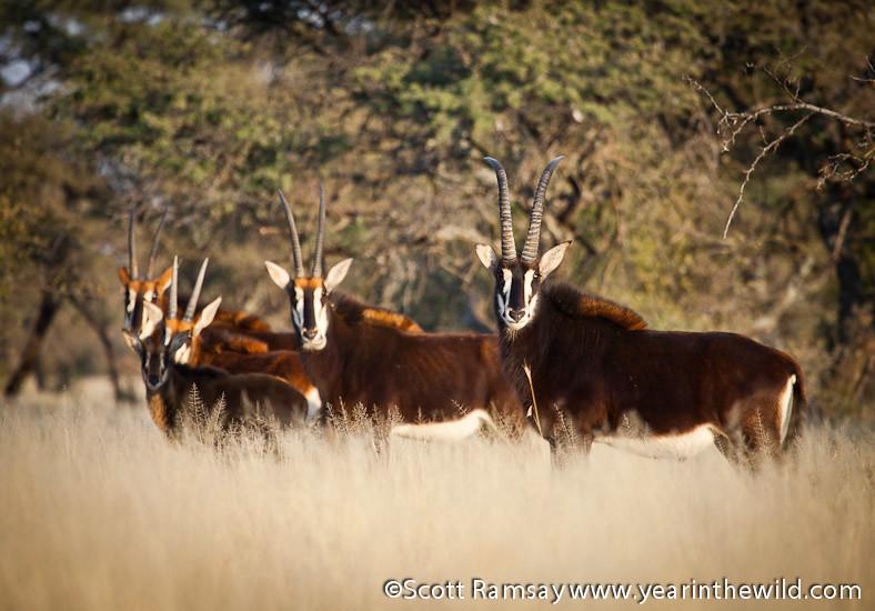 Mokala National Park - South Africa