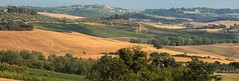 Tuscany Chianti mountains (Bn) Tags: red summer italy sun sunlight holiday colour green leaves florence topf50 cherries strada italia berries bright wine small grow dry visit hills vineyards tuscany grapes olives chianti fields strong farms wildflowers siena taste roads radda product toscane region plums fruity greve produced rubby vino flourish discover wijn bottling sangiovese cellars cultivated classico castellina hillsides harmonious 50faves