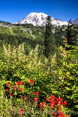 Mt. Rainier and Paintbrush (chasingthelight10) Tags: travel flowers mountains nature photography landscapes events places mountrainiernationalpark wildflowers vistas washingtonstate wildernesstrails indianpaintbrush stevenscanyon otherkeywords