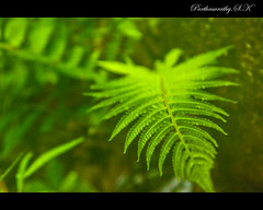 Green All the way! (Parthasarathy.S.K) Tags: green photography kerala greenery godsowncountry partha parthasarathy keralaphotography partha14 parthasarathysk