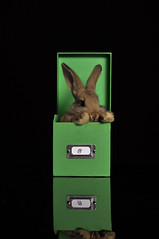 bunnybox (carla ghysels) Tags: reflection rabbit bunny greenbox