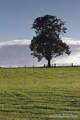 Lone Tree (DMeadows) Tags: cloud tree field grass silhouette fence landscape scotland gate trunk fields lone dumfriesandgalloway davidmeadows nethermill dmeadows davidameadows dameadows yahoo:yourpictures=yoursummer yahoo:yourpictures=yourbestphotoof2012