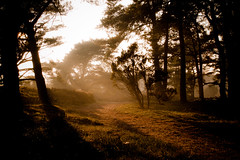 an Autumn evening (Jos Mecklenfeld) Tags: autumn sunset nature netherlands misty fog forest landscape evening herfst bos ricoh heide drenthe landschap drouwenerzand drouwen gx200 ricohgx200