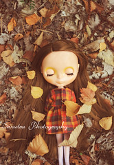 And the Leaves Started to Fall