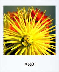 """#DailyPolaroid of 22-9-12 #360 • <a style=""""font-size:0.8em;"""" href=""""http://www.flickr.com/photos/47939785@N05/8019166720/"""" target=""""_blank"""">View on Flickr</a>"""