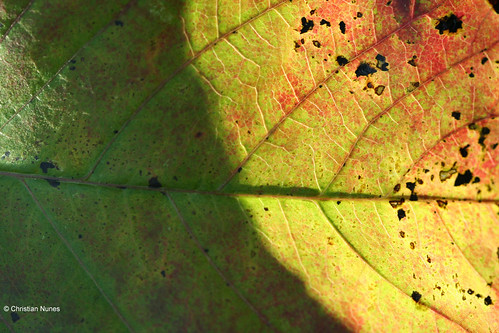 Photo - Autumn Closeup