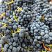 2012 Munselle Merlot Harvest 0020