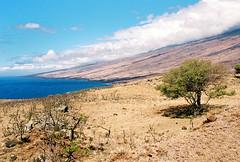 Leeward Mesquite (Procrastixote) Tags: nature 35mm canon eos rebel hawaii desert g side dry maui east hawaiian tropics leeward