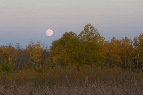 Harvest Moon _2012_09_29_19-01-56_DSC_2774_©LindsayBerger2012 - Version 2