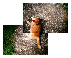 LC-A (Daniel Cane) Tags: pet cats pets colour film grass animal animals rural cat 35mm hair fur countryside ginger nationalpark paw lomo lca feline westsussex pavement tail ground 200iso iso negative 35mmfilm 200 montage photomontage vista plus analogue paws lying joiner southdowns gingercat colournegative c41 agfaphoto lomokompaktautomat southdownsnationalpark agfaphotovistaplus workandcommute worklongfurgingercat salvagejoiners