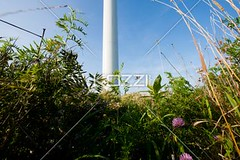 bushes with pole in the background (drewnature8877) Tags: flower green nature floral closeup outdoors photography flora day tranquility nobody nopeople pole foliage growth daytime bushes abundance shrubs clearsky detailed colorimage uncultivated nonurbanscene lowangleview